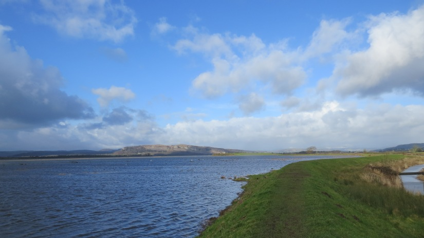 Flooding Estuary
